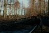 Orkan Hertha: Am 3. Februar 1990 war die Landesstraße zwischen Otterberg und Höringen blockiert. Mit Hilfe von Forstschleppern wurde die Strecke freigeräumt.