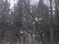 7. Februar 2016 - Absturzgefährdeter Baum, K40 Otterbach - Kaiserslautern-Morlautern