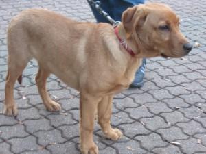 Symbolbild Fundhund (Original)