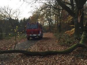 9. November 2015 - Baum über Fahrbahn, Otterberg Heiligenmoschler Berg