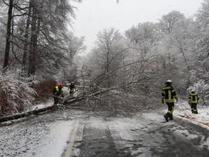 23. Februar 2016 - Baum über Fahrbahn, L387 Otterberg - Höringen