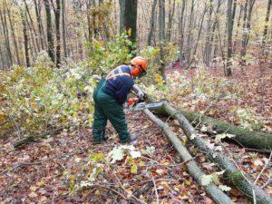 Praktischer Ausbildungsteil im Wald.