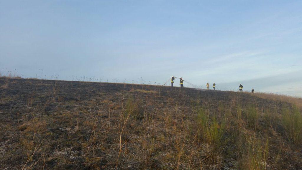 Feuerwehrangehörige löschen den Flächenbrand bei Hirschhorn.