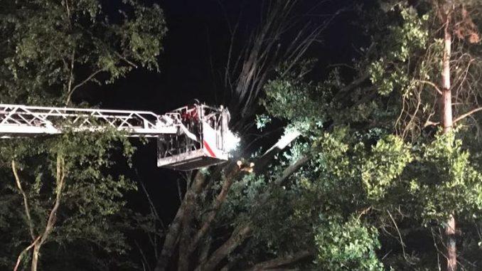 19. Juni 2017 - Umgestürzter Baum, L387 Otterberg - Höringen
