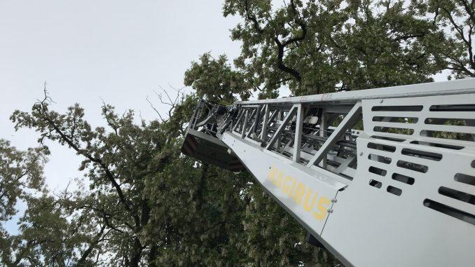 24. Mai 2018 - Beseitigung Unwetterfolgen, Verbandsgemeindegebiet